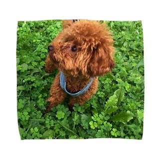 我が家のお犬様 Towel handkerchiefs