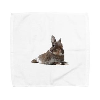 うさぎのほーりー① Towel handkerchiefs