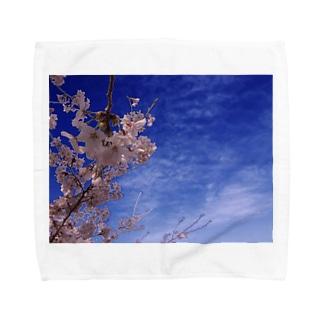 桜 サクラ cherry blossom DATA_P_093 Towel handkerchiefs