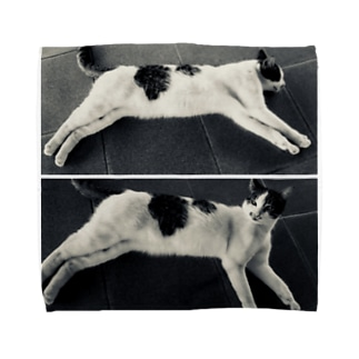 Relax Cat Towel handkerchiefs