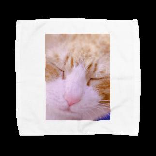 昭和~平成~令和系のりさぴん@の保護猫 セサミくん Towel handkerchiefs