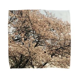 桜と星 タオルハンカチ