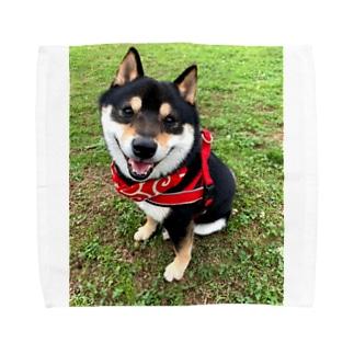 おすわり黒柴 Towel Handkerchief