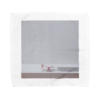 下から見る 猫 Towel handkerchiefs