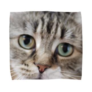 Y-graphicsの猫ちゃん Towel handkerchiefs