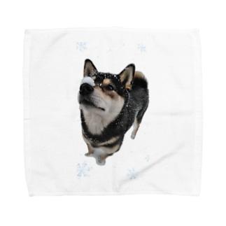 (黒柴)うちのわんこchanシリーズ ひんやり雪実写バージョン 黒柴 Towel handkerchiefs