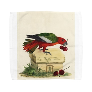 J. Jeffery Print Galleryの博物画の鳥 Towel Handkerchief