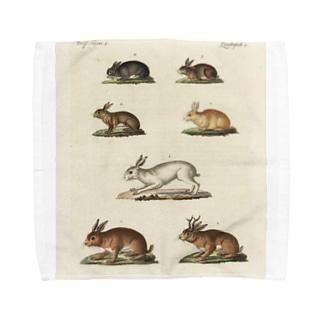 J. Jeffery Print Galleryのドイツのうさぎ Towel Handkerchief