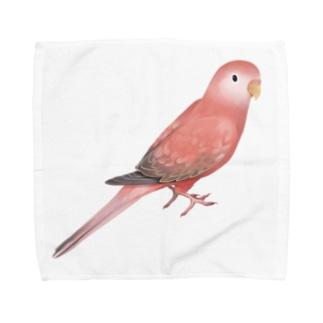 アキクサインコ ピンク【まめるりはことり】 Towel handkerchiefs