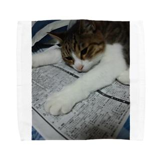 のびのびネコネコ Towel handkerchiefs