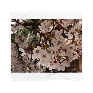 桜 サクラ cherry blossom DATA_P_152 春 spring Towel handkerchiefs