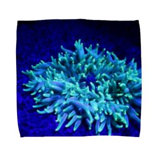 フローダイビング(イソギンチャク) Towel handkerchiefs