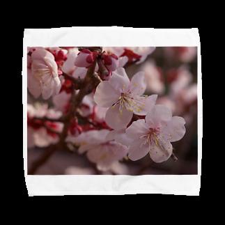 hiroki-naraの梅 ウメ Japanese apricot DATA_P_155 春 spring Towel handkerchiefs