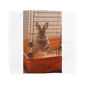 ウサギのピーターくん Towel handkerchiefs