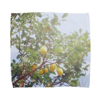 あの日のレモン Towel handkerchiefs