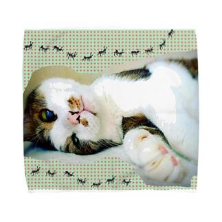 老猫にゃあ Towel handkerchiefs