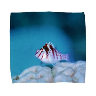 ちっちゃい魚 Towel handkerchiefs