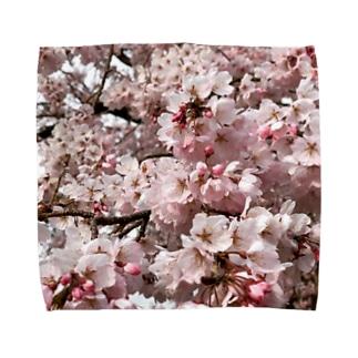 季節感のない桜 Towel handkerchiefs