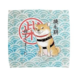 換毛期(赤柴) Towel handkerchiefs