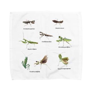 関東のカマキリ(背景白色ver) Towel handkerchiefs