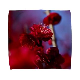 赤い梅(写真) Towel handkerchiefs