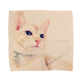 虎次郎 Towel handkerchiefs
