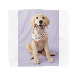 ゴールデンレトリバーCoeurクールグッズ Towel handkerchiefs