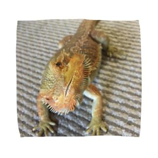 フトアゴヒゲトカゲのココアさん Towel handkerchiefs
