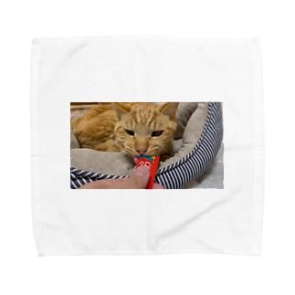 【NEW】ちゅーるもみじ Towel handkerchiefs