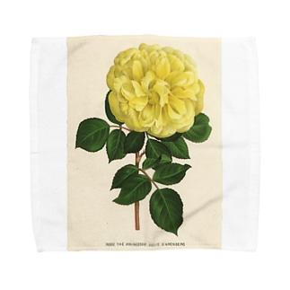 ベルギーのバラ タオルハンカチ