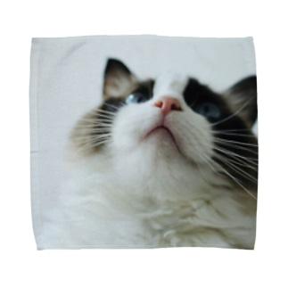 マロンちゃん😍 Towel handkerchiefs
