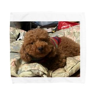 うちの愛犬かずま Towel handkerchiefs