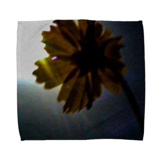 やわらかな光 Towel handkerchiefs