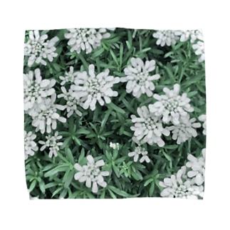 イベリスの花2 Towel handkerchiefs