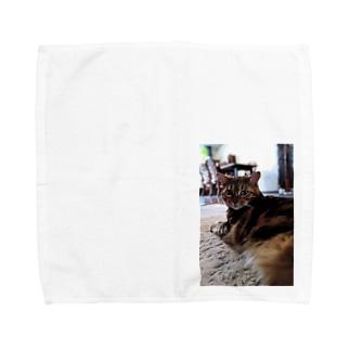 キビお見合い写真グッズ Towel handkerchiefs