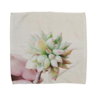 Succulent plants1 Towel handkerchiefs