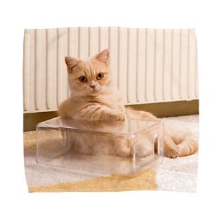 ととろ Towel Handkerchief
