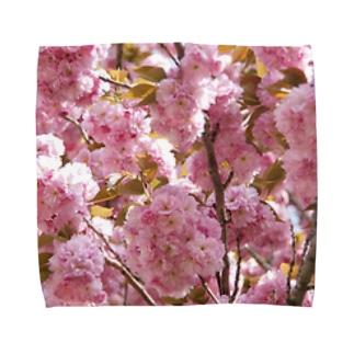 八重さくら 1 Towel handkerchiefs