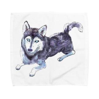 シベリアンハスキー Towel handkerchiefs