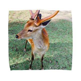 奈良 鹿  Towel handkerchiefs