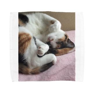愛猫モモ Towel Handkerchief
