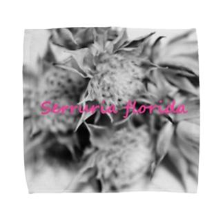 セルリア Towel Handkerchief