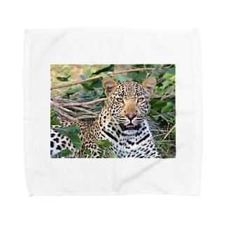 豹柄 Towel handkerchiefs
