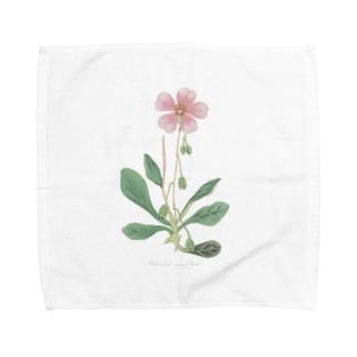 カランドリニア <アンティーク・ボタニカルアート> Towel handkerchiefs
