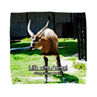 シタツンガさん Towel handkerchiefs