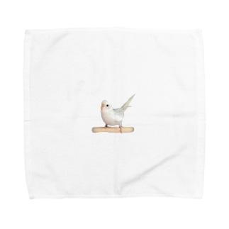 セキセイインコ「シャチホコ!」 Towel handkerchiefs