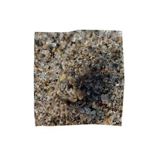 砂に擬態!?コメツキガニ タオルハンカチ