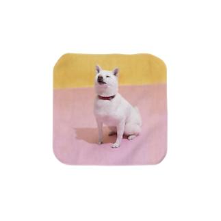 タオルハンカチS 白柴「我輩は犬である」 Towel handkerchiefs