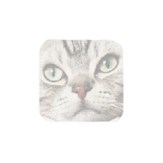 猫 Towel handkerchiefs
