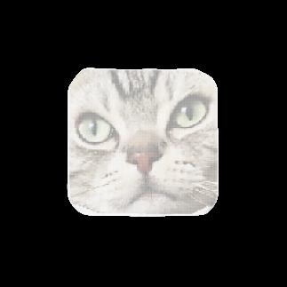 あ めの猫 Towel handkerchiefs